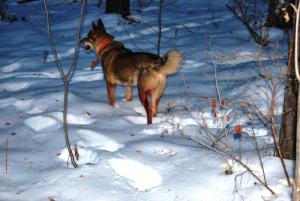 Мазь при ушибах и растяжениях для собак